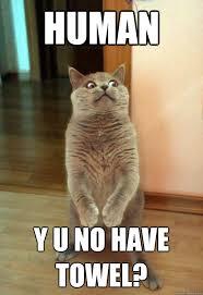 Towel Meme - human y u no have towel cat meme cat planet cat planet