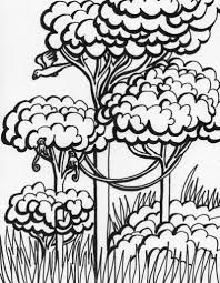 12 images of rainforest coloring pages for kids rainforest