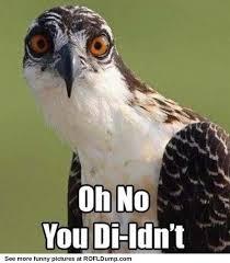 Funny Bird Memes - pin by emilie josephine on mamma meme pinterest stuffing