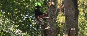 atlanta arbor tree care specialist llc smyrna ga home
