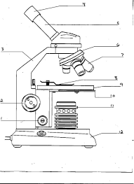 microscope parts worksheet parts of a microscope worksheet