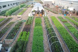 kingsborough community college urban farm gardening pinterest