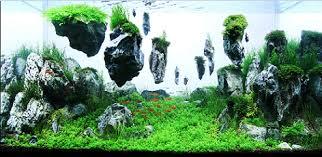 Aquarium Aquascaping Aquascaping Les Plus Beaux Aquariums
