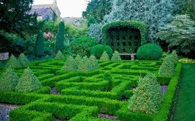 Garden Hedges Types Problems With Growing Box The Telegraph