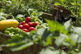 6 benefits of growing your own food