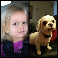 Doge Girl Meme - my dog looks like the girl from that meme funny
