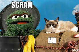 Oscar The Grouch Meme - lunch club grumpy cat and oscar the grouch had the ultimate