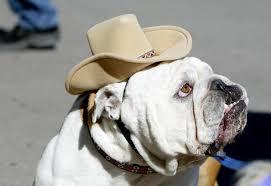 English Bulldog Halloween Costumes Adorable Doggie Halloween Costumes 99 5 Wycd Detroit U0027s Country