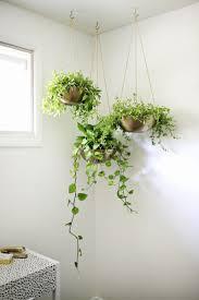 Indoor Modern Planters Indoor Garden Idea Hang Your Plants From The Ceiling U0026 Walls