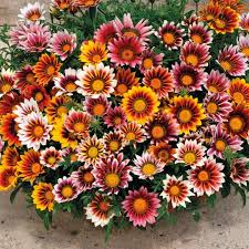 best 25 flower seeds ideas on pinterest succulent seeds