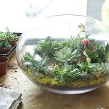 blog about diy terrarium kits for succulents juicykits com