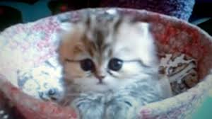 beautiful kittens the most beautiful kitten youtube
