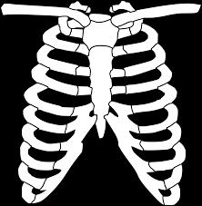 Halloween Skeleton Clip Art Free To Use U0026 Public Domain Skeleton Clip Art