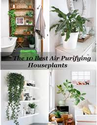 the 10 best air purifying house plants