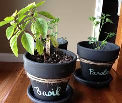 wellness inspired gift idea chalkboard potted plants u0026 herbs