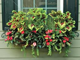 What To Plant In Window Flower Boxes - plants for window boxes flowers plants for window boxes
