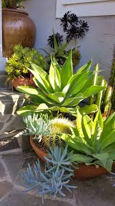 california natives plants mar vista green garden showcase 3972 coolidge avenue cluster 1e