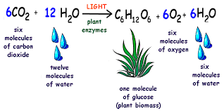 What Happens During The Light Dependent Reactions Of Photosynthesis Bil 226 Lecture 10