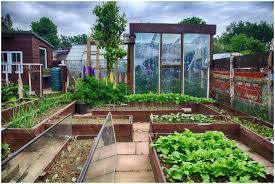 backyards awesome greenhouse backyard greenhouse backyard