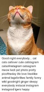 Cat Lover Meme - 25 best memes about goodnight goodnight memes