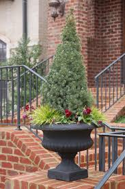 evergreens for containers living tree