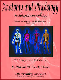 Physiology Videos Nat755 Fearfully And Wonderfully Made Online Videos U0026 Pdf Manual