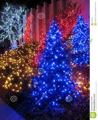 Outdoor Christmas Trees by Outdoor Christmas Tree Display Royalty Free Stock Images Image