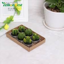 kerzen online online get cheap kaktus kerzen aliexpress com alibaba group