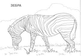 awesome collection of wild animal coloring pages in template