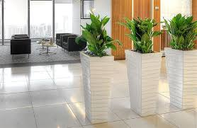 plants for office implementing plants within office design planters group
