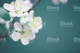 beautiful spring beautiful spring flowers stock photo more pictures of beauty in