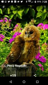 153 best owls images on pinterest animals baby owls and nature