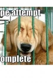 Cute Dog Memes - 45 funny dog memes dogtime