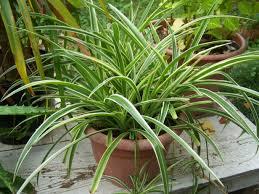 plantes dépolluantes chambre à coucher chambre plantes dépolluantes pour maison plante plantes qui plante