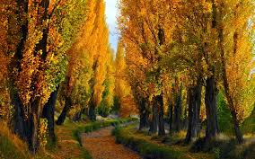 Cute Fall Wallpaper by Cute Roads Colored Forest Track Nature Sunken Path Amazing