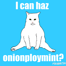 Lol Meme Gif - cat lol gif find download on gifer 500x500 px