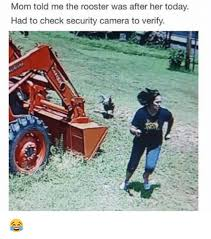 Rooster Meme - 25 best memes about rooster rooster memes
