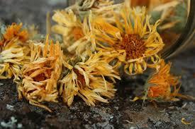 Calendula Flowers Calendula A Natural Remedy For Irritated Eyes