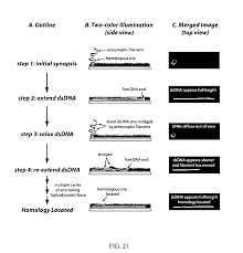 patente us20080274905 microfluidic cells with parallel arrays of
