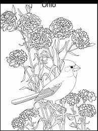 coloring mesmerizing birds coloring bird pages birds