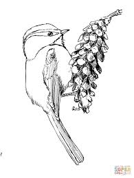 chickadee coloring pages free coloring pages