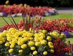 Flower Gardens Wallpapers - flower garden wallpaper free downloads wallpaper free wallpaper