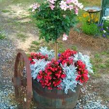 whiskey barrel spilling flowers gardening pinterest whiskey
