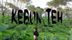 Teh Rolas Wonosari explore malang kebun teh wonosari
