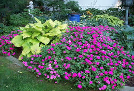 12 Best Plants That Can by Shade Garden Tips Tools And Gardening Secrets For Western