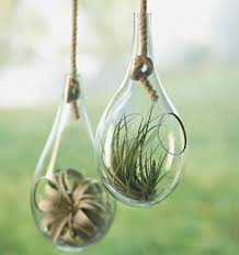 teardrop hanging terrariums the green head