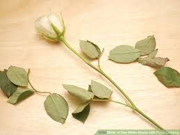 how to dye white roses with food coloring 8 steps with pictures