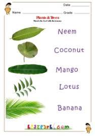 plants u0026 trees science worksheet for kids