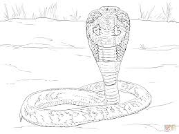 indian cobra coloring page free printable coloring pages
