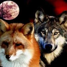 the fox and wolf friendship listen and free albums